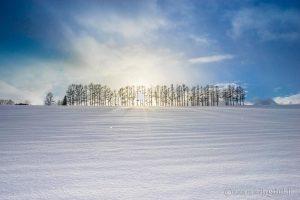 寒いからこそ価値がある!冬の美瑛の魅力を紹介