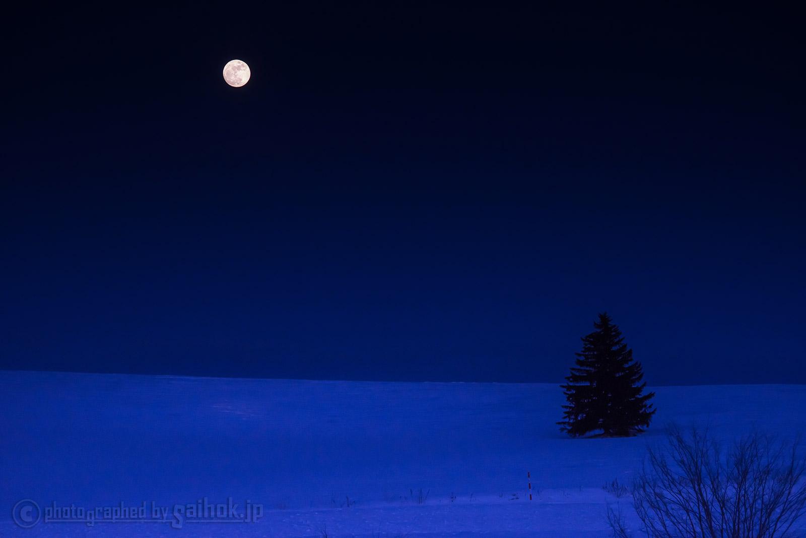 神秘の世界に絶句!美瑛の青い池のライトアップ