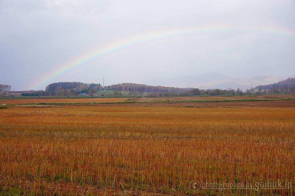 秋は赤いじゅうたんが広がる「幌加内そば畑」
