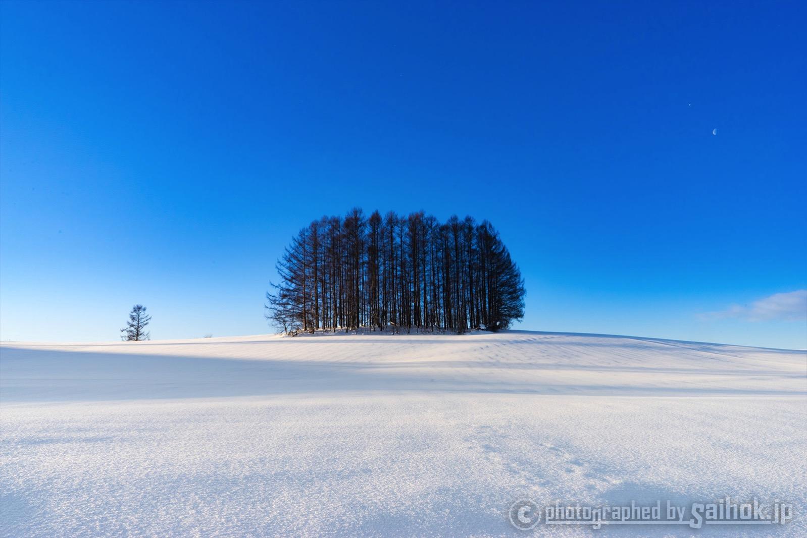 絶景に感動!北海道美瑛(びえい)の冬の観光スポットへGO ...