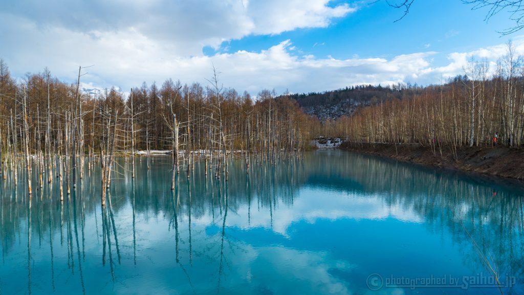 待ち焦がれた春の訪れを見る♪ 美瑛の青い池周辺