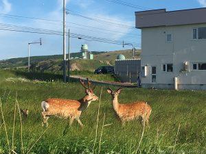 野生動物が歓迎!?かわいいけど注意が必要、北海道ドライブ
