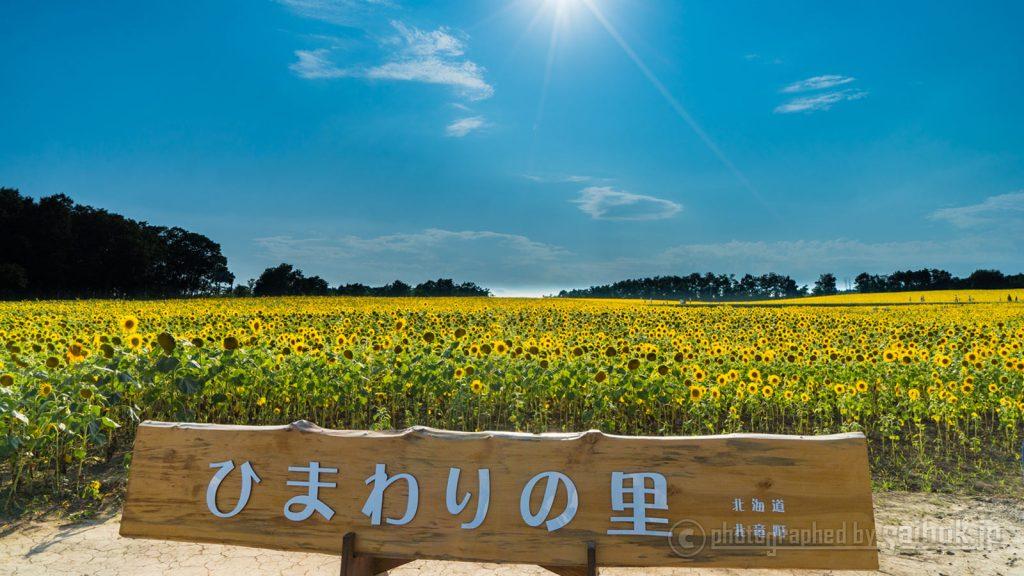真っ黄色の夏カラー!日本一のひまわり畑が広がる「北竜町」