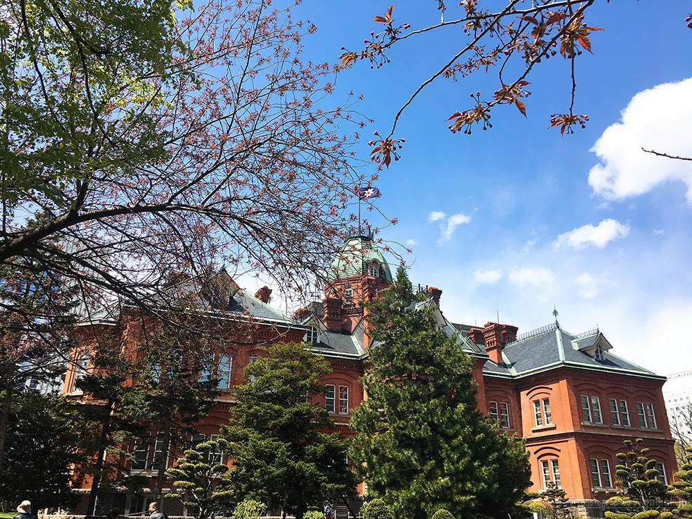 5月が見ごろ!桜とチューリップの北海道庁赤レンガ