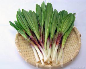 一年に数日のみの収穫!幻の山菜「天然行者にんにく」