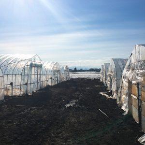 グリーンアスパラ収穫開始!