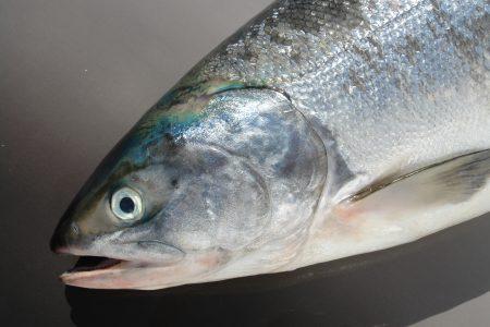 めじか鮭を美味しくお召し上がりいただくために(さばき方・保存方法・料理レシピ)