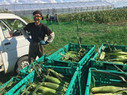 収穫開始しました。ピュアホワイトMIX育成日記