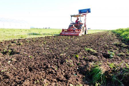 美味しいピュアホワイトMIXは、畑の土づくりから始まります。